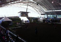 equine event (5)