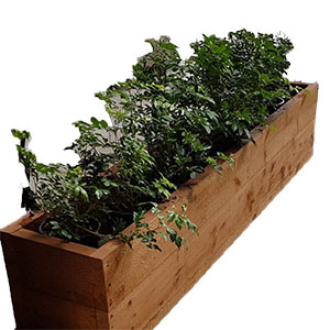 For a rustic vibe, it's hard to go past Sydneywide Hire Group's Planter Box. Great for casual and corporate events our Rustic Hedge Planter Boxes add some life to any scene